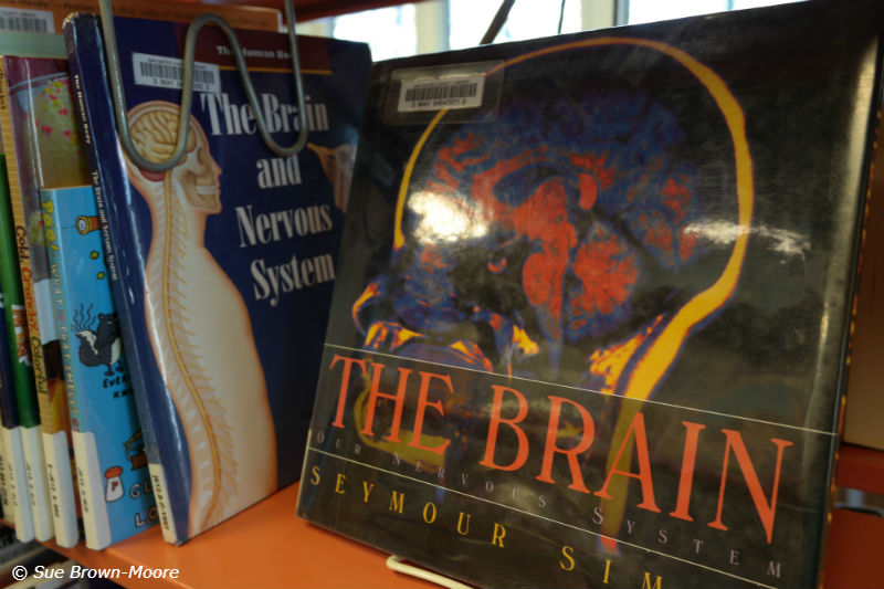 You can learn brain science and neurology at your public library...